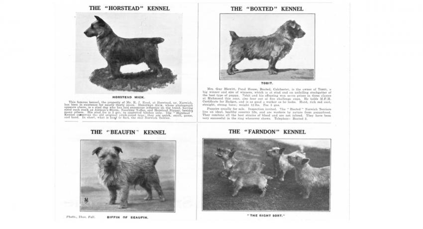 Our Dogs 1934 Ads Norwich Terrier